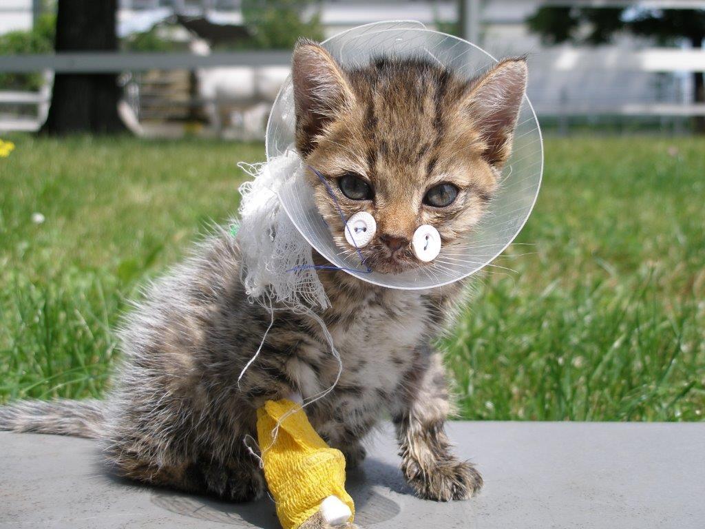 Klinik für Kleintiere | Hals-Nasen-Ohren-Heilkunde